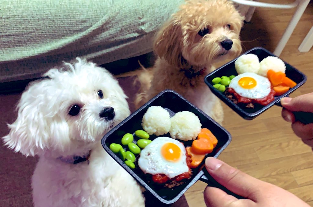 犬とロコモコ1