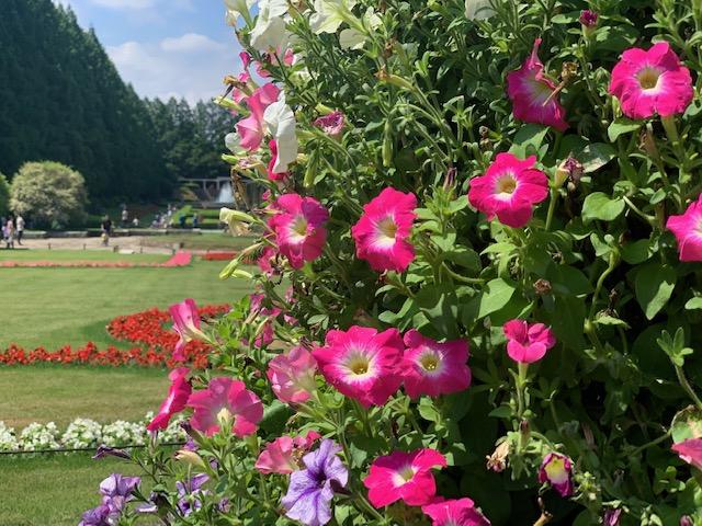 お花と景色