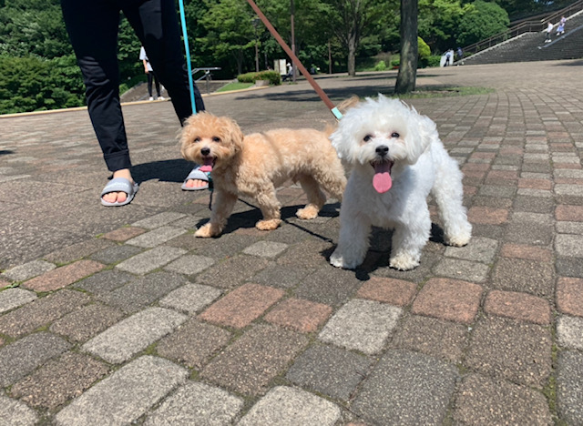 2頭の犬の散歩