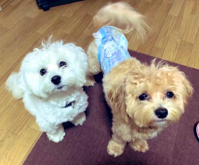 2頭の犬1