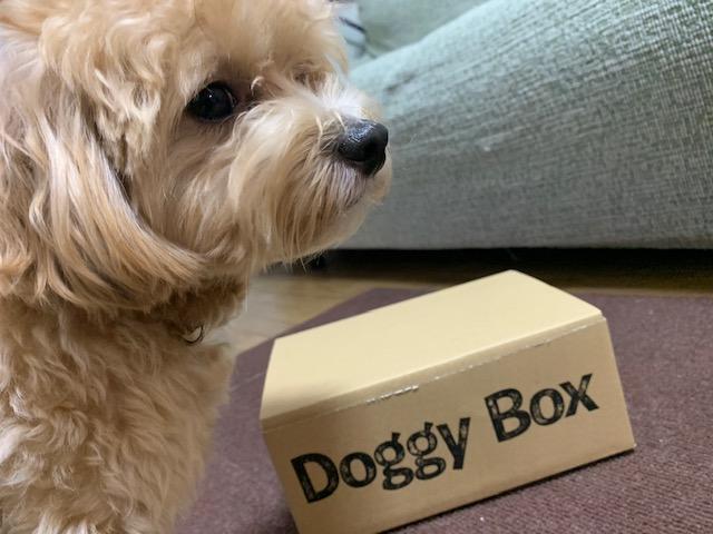 ドギーボックスと犬