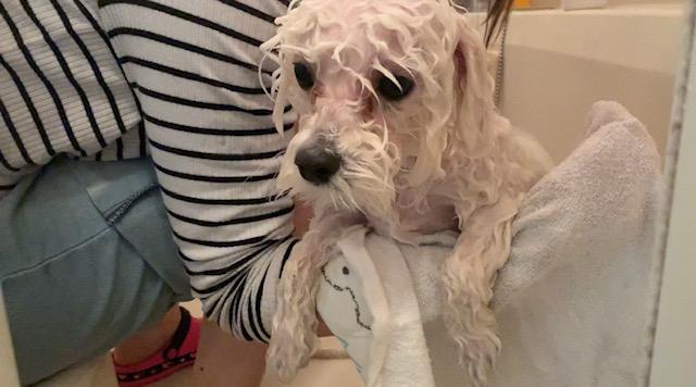 お風呂に入っている犬