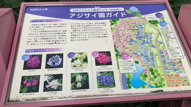アジサイ園のマップ