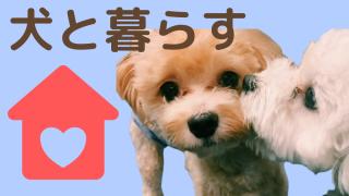 犬と暮らす