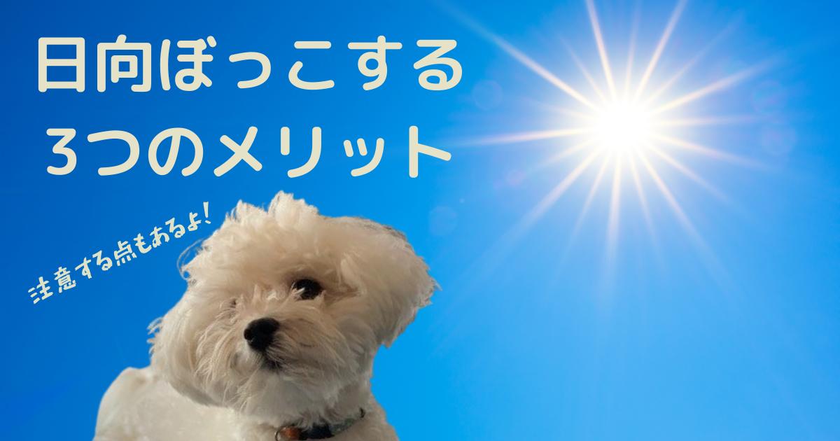 犬が日向ぼっこするメリット
