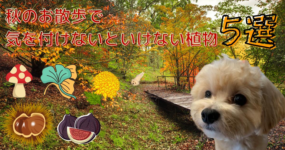 秋の散歩で注意すること