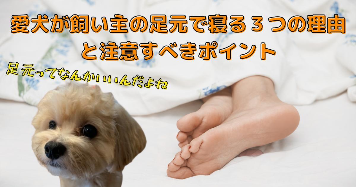 犬が飼い主の足元で寝る理由